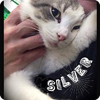 Adopt A Pet :: Silver - Hartford City, IN