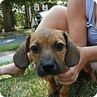 Adopt A Pet :: Mimi - South Jersey, NJ