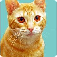 Adopt A Pet :: Alice - Encinitas, CA