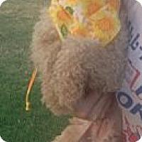 Adopt A Pet :: Winona - McAllen, TX