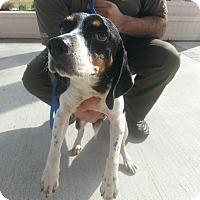 Adopt A Pet :: WILLY - Sugar Land, TX