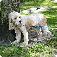 Adopt A Pet :: Peachy - Jupiter, FL