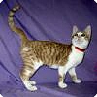 Adopt A Pet :: Autumn - Powell, OH