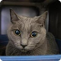 Adopt A Pet :: Susan - New Milford, CT