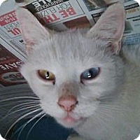 Adopt A Pet :: Maka 'alohi (medical hold) - Chilhowie, VA