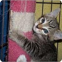 Adopt A Pet :: Vinnie - Acme, PA