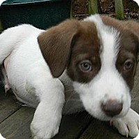 Adopt A Pet :: Russell Brown - Brattleboro, VT