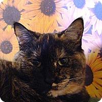 Adopt A Pet :: Kitty - Albany, NY