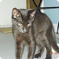 Adopt A Pet :: Mimi - CARVER, MA