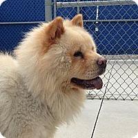 Adopt A Pet :: Paddington - Tillsonburg, ON