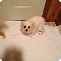 Adopt A Pet :: Sandy - Butler, OH