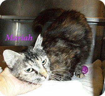 Domestic Mediumhair Cat for adoption in El Cajon, California - Mariah