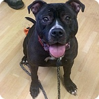 Adopt A Pet :: Gia in CT - Manchester, CT