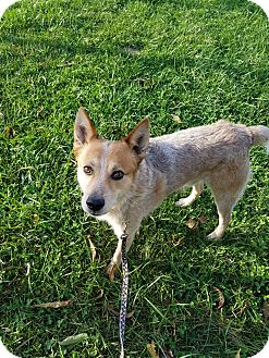 Australian Cattle Dog Mix Dog for adoption in LaGrange, Kentucky - BOOMERANG