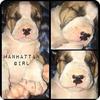 Adopt A Pet :: Manhattan - Allen, TX