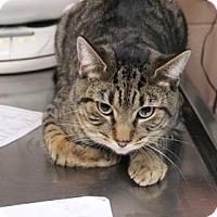 Adopt A Pet :: Spencer - Daytona Beach, FL