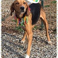 Adopt A Pet :: Betty - Hicksville, NY