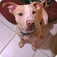 Adopt A Pet :: Sunny - Elyria, OH