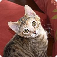 Adopt A Pet :: Winnie - Arlington/Ft Worth, TX