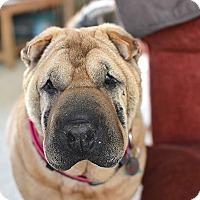 Adopt A Pet :: Kim - Durham, NC
