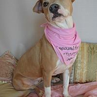 Adopt A Pet :: Destiny - Aurora, CO