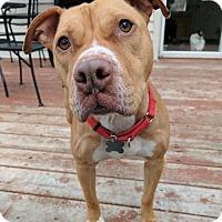 Adopt A Pet :: Molly - Grand Rapids, MI