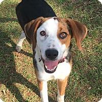 Adopt A Pet :: Goober - Jacksonville, NC