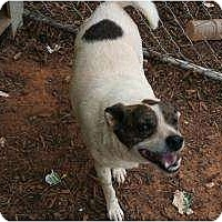 American Bulldog/Beagle Mix Dog for adoption in Hayden, Alabama - Lucy