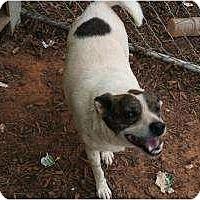 Adopt A Pet :: Lucy - Hayden, AL