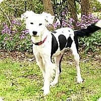 Adopt A Pet :: Dundee - Mocksville, NC