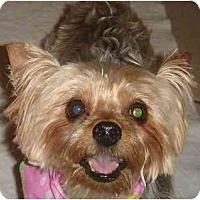 Adopt A Pet :: Cami - Jacksonville, FL