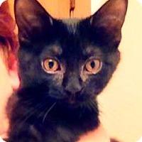 Adopt A Pet :: Ria - Green Bay, WI