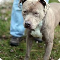 Adopt A Pet :: Fluffy - Tinton Falls, NJ