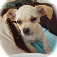 Adopt A Pet :: Hans - La Habra Heights, CA