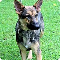 Adopt A Pet :: Ariel - Naugatuck, CT