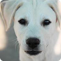 Adopt A Pet :: *Birch - PENDING - Westport, CT