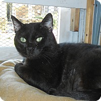 Adopt A Pet :: Cruiser - Whiting, IN
