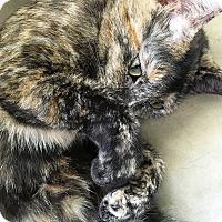 Adopt A Pet :: Confetti - Orange, CA