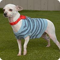 Adopt A Pet :: Wendy - Van Nuys, CA