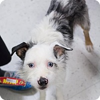 Adopt A Pet :: Oreo - Grand Rapids, MI