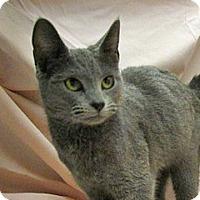 Adopt A Pet :: 17-c03-005 Eugenie - Fayetteville, TN