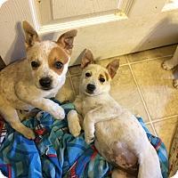 Adopt A Pet :: Tumbler - Hohenwald, TN