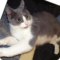 Adopt A Pet :: Ms. Silver - Miami, FL