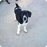 Adopt A Pet :: Donna -In CT! - Adamsville, TN