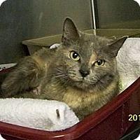 Adopt A Pet :: Lavendar - Dover, OH