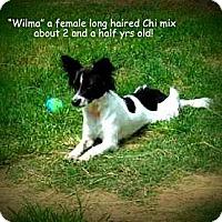 Adopt A Pet :: Wilma - Gadsden, AL