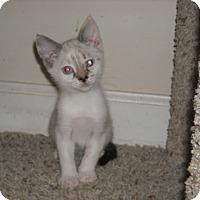 Adopt A Pet :: Piper - Arlington, VA
