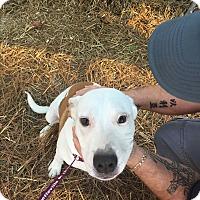 Adopt A Pet :: Greg - Garner, NC