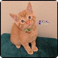 Adopt A Pet :: Squirt - Richardson, TX