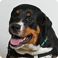 Adopt A Pet :: Zeus - Walnut Creek, CA
